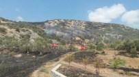 KALAFAT - Kuşadası'nda Zeytinlik Ve Makilik Yangını