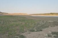 KİMYASAL GÜBRE - Keşan'da İçme Suyunu Karşılayan Barajın Kuruyan Alanlarına Ürün Ektiler