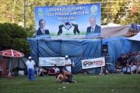 YAŞAR AKSANYAR - Dursunbey Yağlı Güreşlerinin Başpehlivanı Şaban Yılmaz Oldu