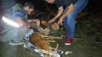 Artvin'de Yaralı Karacaya Polis Şefkati