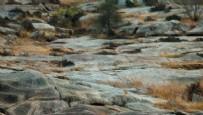 YABANİ HAYVANLAR - Fotoğraftaki leoparı bulabildiniz mi?