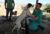SOKAK HAYVANI - 'Satın Almayın Sahiplenin' Kampanyasıyla 550 Sokak Hayvanı Sahip Buldu
