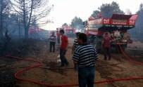 ORMAN İŞÇİSİ - Balıkesir'de Orman Yangını