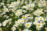 Güneşlenirken cildinizi lekelere karşı koruyun