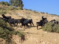 ATAKÖY - Kurban Öncesi Karacasulu Çobanları İşsizlik Korkusu Sardı