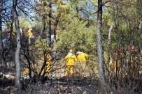 ORMAN İŞÇİSİ - Bodrum'da Çıkan Orman Yangını Kısa Sürede Söndürüldü