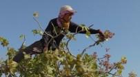 LİSE ÖĞRENCİSİ - Gaziantep'te 45 Dereceyi Bulan Sıcakta 45 TL Yevmiye İçin Çalışıyorlar
