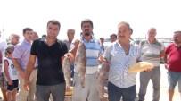 YÜKSEL MUTLU - Mersin'de Lagos Balığının Avlanma Yasağına Tepki