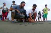 DENİZ KAPLUMBAĞALARI - Yavru Kaplumbağalar Denizle Buluştu