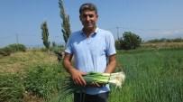 Edremit Körfezinin Taze Soğanı Burhaniye'de Üretiliyor