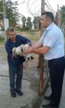 İskenderun'da Yaralı Leyleğe Zabıtalar Sahip Çıktı