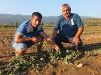GÖKHAN GÜNEY - Kiraz'da Dolu Çiftçiyi Vurdu