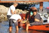 DENİZ KAPLUMBAĞALARI - Caretta Carettayı Kurtarmak İçin Seferber Oldular