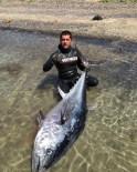 ORKİNOS - Dev Balığı Zıpkınla Vurdu