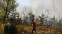SIIRT BELEDIYESI - Siirt'te 300 Dönüm Fidanlık Yandı