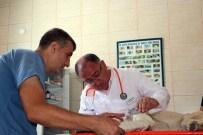 VEFA SALMAN - Veteriner Belediye Başkanı Yaralı Hayvana Müdahale Etti