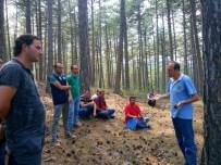 AKTÜEL - Kütahya'da Ormanlar Gençleştiriliyor