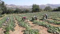 KARNABAHAR - Selendi Tarımı Büyükşehir'le Canlanıyor