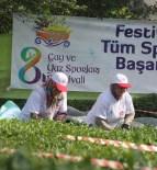 RİZE BELEDİYESİ - Çay Toplama Yarışmasının Galibi Erkekler