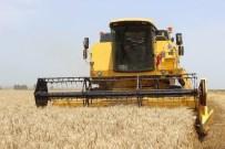 KAPAKLı - Tekirdağ Buğday Üretiminde 8'İnci Sırada