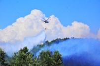 MEHMET ÇELIK - Orman Yangınlarında İnsan Eli