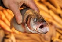 BALIK SEZONU - Balıkçılar 1 Eylül'de 'Vira Bismillah' Diyecek