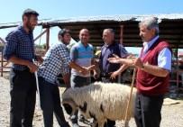 PAZAR ESNAFI - Erzurum Hayvan Pazarında Hareketlilik Başladı