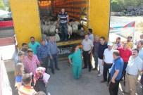 MEHMET GÜNDOĞDU - Muş'ta Genç Çiftçilere Hayvanları Dağıtılmaya Başlandı