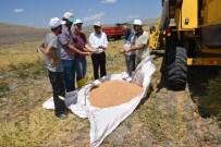 KİMYASAL GÜBRE - Yozgat'ta Mikrobiyal Gübre İle Ekimi Yapılan Nohuttan Daha Fazla Verim Elde Edildi