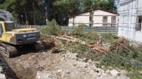 30 Yıllık Çam Ağaçları, İstinat Duvarı Uğruna Yok Edildi