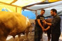KURBAN PAZARI - İzmir'de Kurban Bayramı Hareketliliği