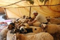 İBRAHIM ÇETIN - Kurbanlık Satıcıları 8-9 Eylül'ü Bekliyor