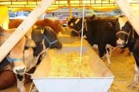 HASTALIK BELİRTİSİ - Sağlık Raporu Olmayan Hayvanları Kurbanlık Olarak Almayın