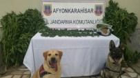 Evlerinin Bahçelerinde Hint Keneviri Yetiştiren Şahıslara Jandarma Baskını