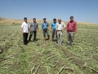 DOLU YAĞIŞI - Sandıklı'da Dolu Ve Şiddetli Yağış Tarım Ürünlerine Zarar Verdi