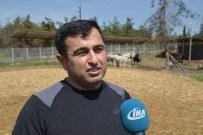 BENZERLIK - Klonlu Sığırlar Eti Ucuzlatacak