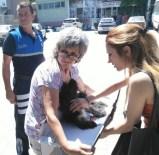 ULUDERBENT - Yaralı Köpeğe Zabıtadan Ambulans Hizmeti