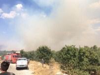 YAŞAR AKSANYAR - 30 Hektarlık Alan Yandı