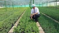 MAHMUT YıLMAZ - Mersin'de Son 10 Yılda 89 Milyon Fidan Üretilerek Toprakla Buluşturuldu