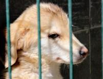 SOKAK HAYVANI - Çankaya Belediyesi, Sokak Hayvanlarına Sahip Çıkıyor