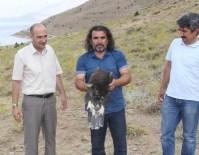 ORMAN MÜDÜRLÜĞÜ - Tedavisi Tamamlanan İki Kaya Kartalı Bir Kızıl Şahin Doğaya Bırakıdı
