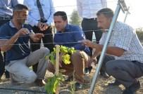 RECEP GÖKÇE - Parçalı Tarım Arazileri İçin Bağcılık Fırsatı