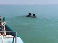 YEŞILDAĞ - Göle Atlayan Kurbanlıklar Kementle Yakalanabildi