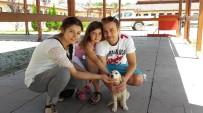 SOKAK HAYVANI - Sokak Hayvanları Bakım Evi Bayramda Ziyarete Açık Olacak