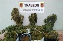HINT KENEVIRI - Trabzon'da Uyuşturucu Operasyonu