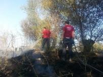 ANIZ YANGINI - Anız Yangınında Yaklaşık 80 Ağaç Zarar Gördü