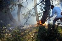 ORMAN İŞLETME MÜDÜRÜ - Karabük'te Orman Yangını