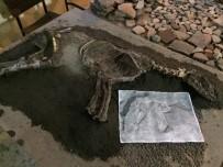 ÇOBAN KÖPEĞİ - 2700 Yıllık Köpek İskeleti Sergilenecek