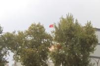 ATATÜRK BULVARI - Adıyaman'da Şiddetli Rüzgar Ağacı Devirdi