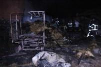 BÜYÜKBAŞ HAYVAN - Amasya'da Ahır Yangını Açıklaması 6 Hayvan Telef Oldu